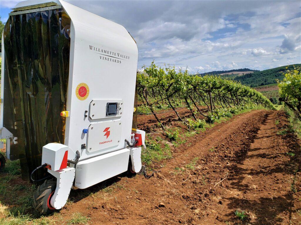 UV-C Robot in front of vines at Willamette Valley Vineyards