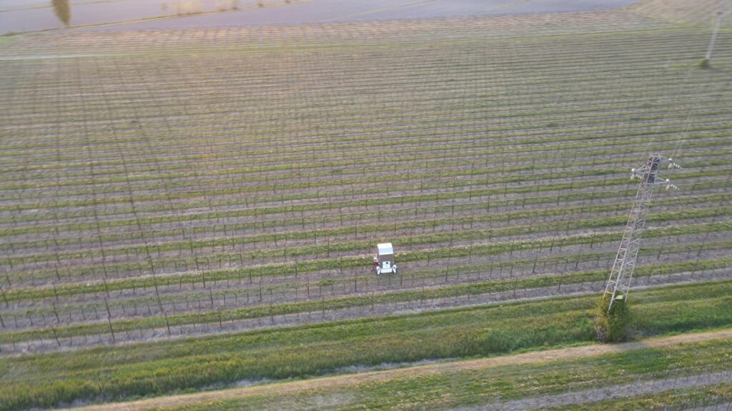 Grapevine Open Field being treated by Thorvald agricultural robot