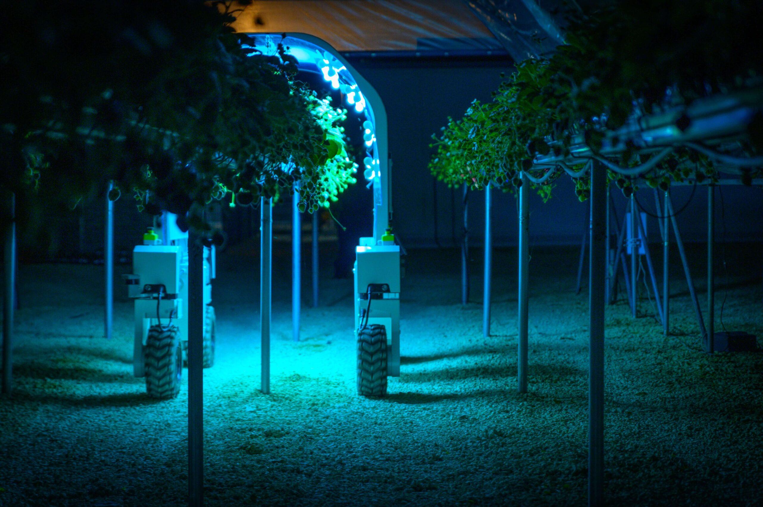 UV Light Treatment in Polytunnels
